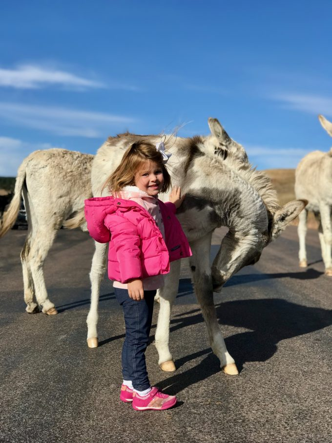 Braying Burros at Custer State Park